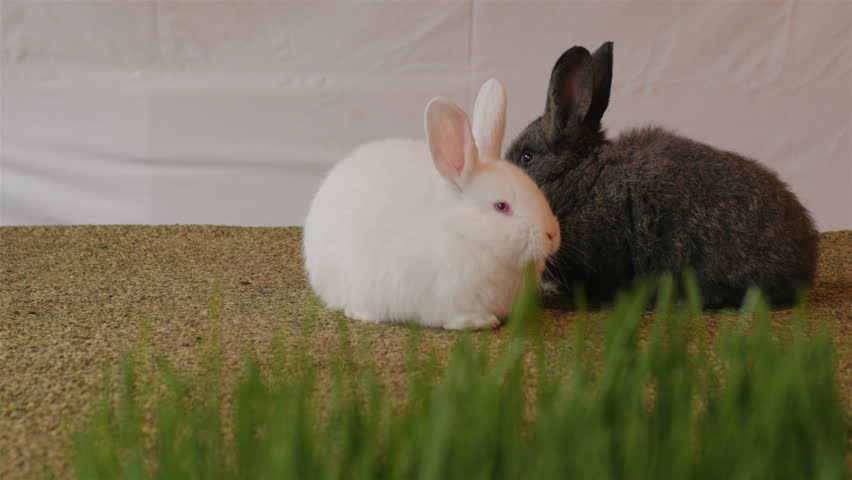 bunny rabbit sniffing around - photo #49