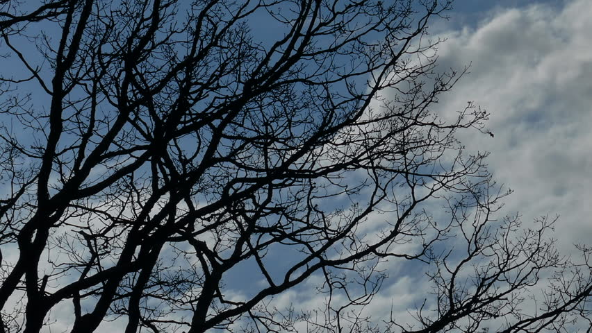 Panning Through Tree Branches Under Majestic Fast Moving Sky  - HD stock footage clip
