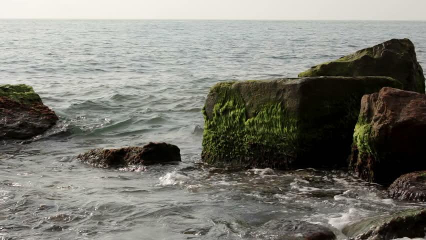 Sea stones covered with algae