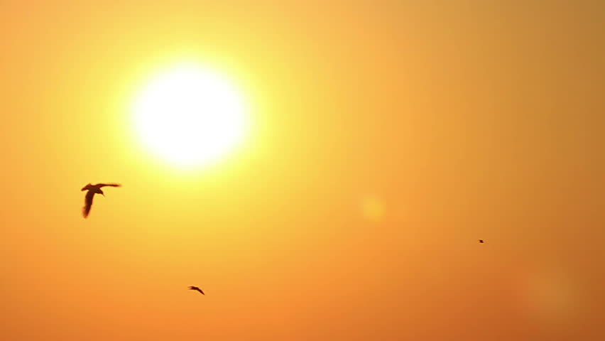 Seagulls on sun background. Warm sunset and flying birds. Slow motion