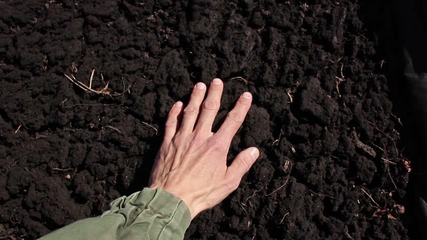 Human hand takes a sample of the black fertile soil stock for Fertile soil 07