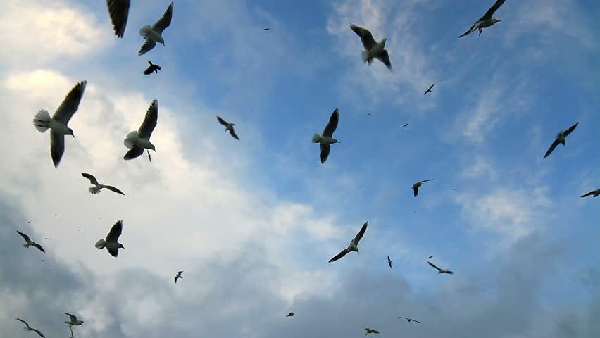 Flock of birds soaring high against the blue sky
