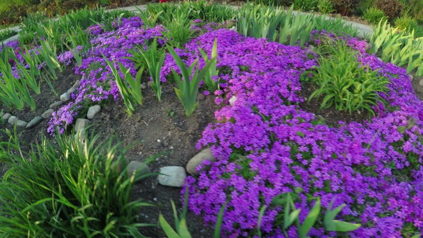 In spring park shoots of garden flowers
