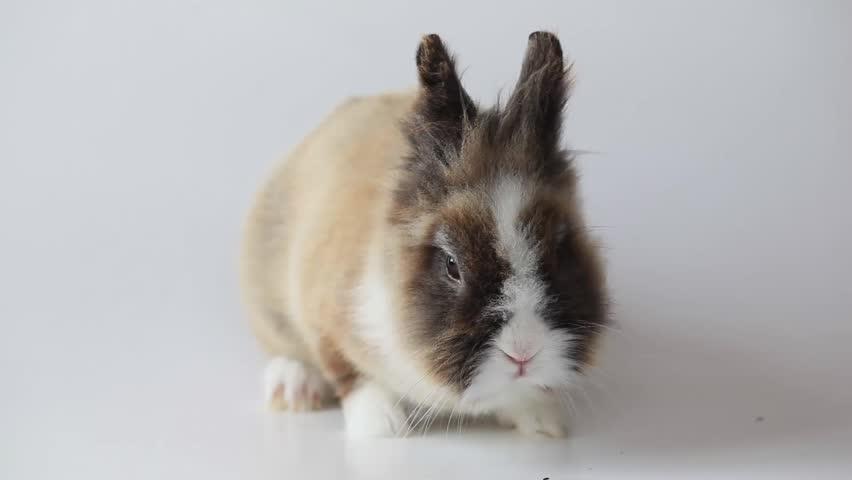 Header of Bunny